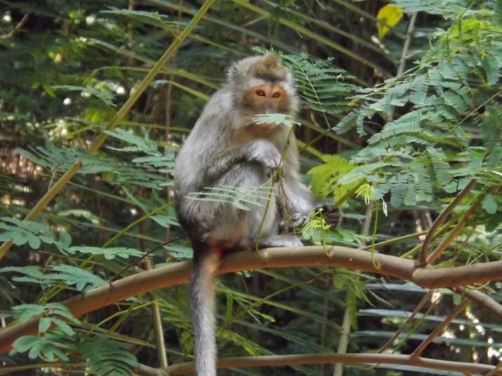 monyet tahura pagi hari